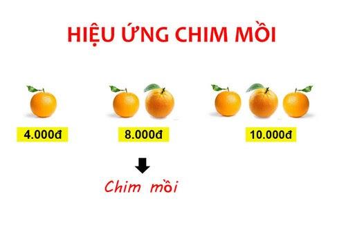 hieu-ung-chim-moi-trong-marketing-1